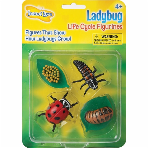 Insect Lore Ladybug Life Cycle Stages Perspective: front