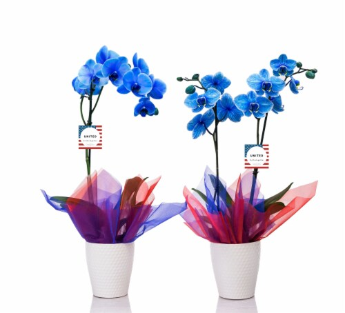 Florist White Orchid in Ceramic Pot - White Perspective: front