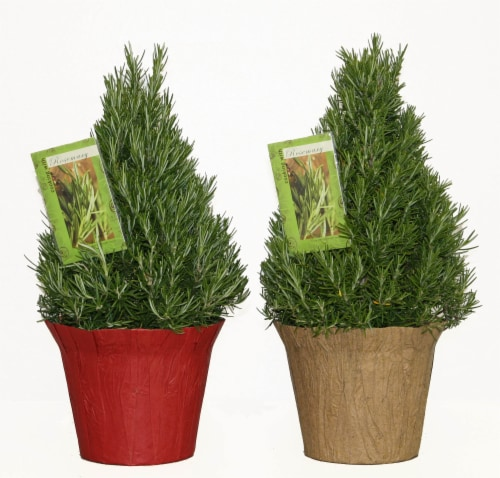 Rosemary Assorted Potted Plant with Pot Cover and Cookbook Perspective: front