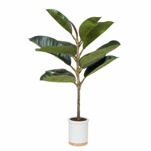 Potted Rubber Plant (Set of 2) 30 H Polyester/Ceramic Perspective: front