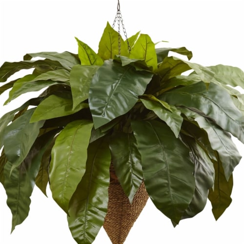 Giant Birds Nest Fern with Cone Hanging Basket Perspective: front