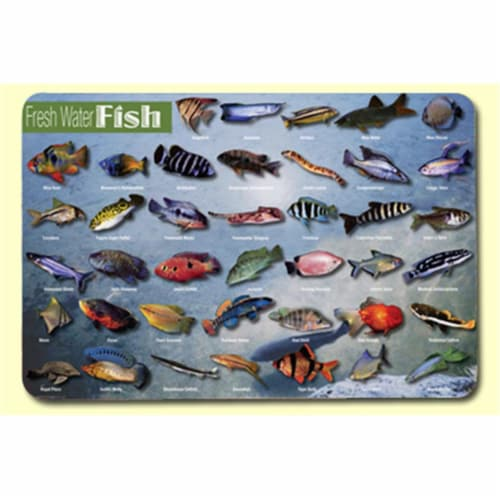 Painless Learning FWF-1 Freshwater Fish Placemat - Pack of 4 Perspective: front