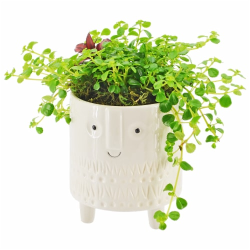 Foliage with Face Potted Plant Perspective: front