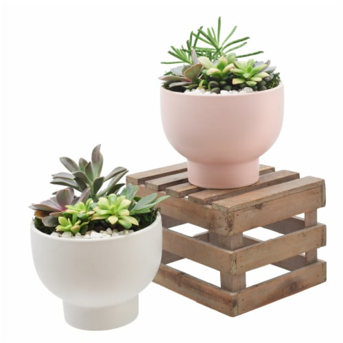 Chalice 5.5 inch pot with Succulent Garden Perspective: front