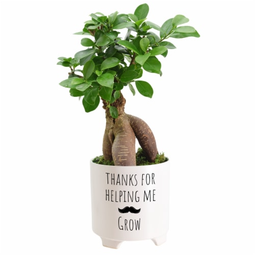 Thanks For Helping Me Grow Father's Day Mustache Medium Bonsai - Assorted Perspective: front