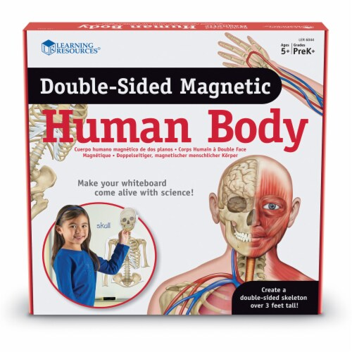 Learning Resources® Double-sided Magnetic Human Body Set Perspective: front