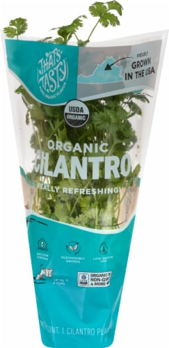 That's Tasty Organic Cilantro Plant Perspective: front