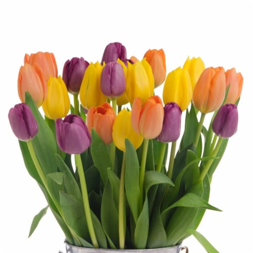 24-Stem Tri-Color Tulips (Approximate Delivery is 1-3 Days) Perspective: front