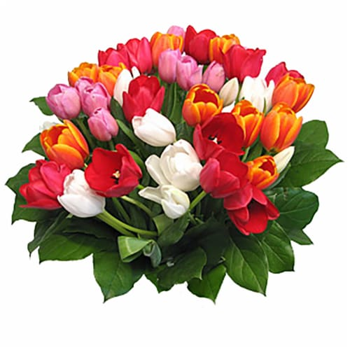 40-Stem Rainbow Tulips with Greens (Approximate Delivery is 1-3 Days) Perspective: front
