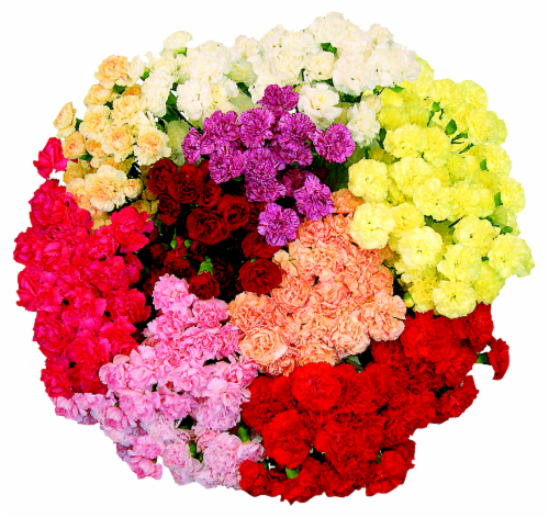 Grower Bunch Mini Carnations Perspective: front