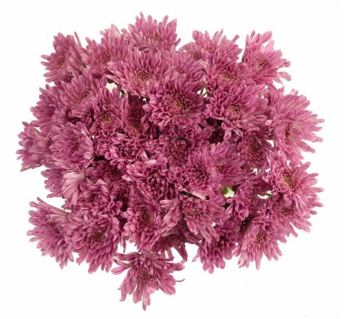Purple Poms Perspective: front