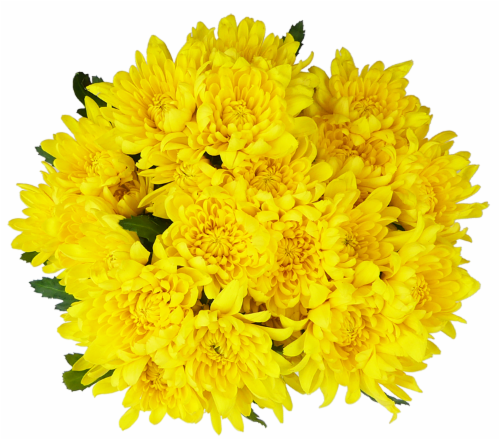 Yellow Poms Perspective: front