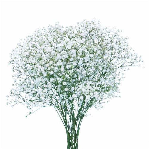 Gypsophillia Flowers Perspective: front
