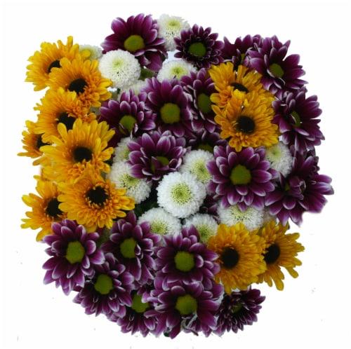 Jumbo Poms Assorted Bouquet Perspective: front