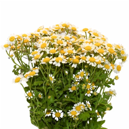 Galleria Farms Daisy Chamomile Filler Flower Bouquet Perspective: front