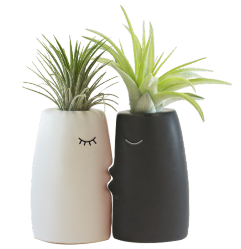 LiveTrends Kiss Me Potted Plants - 2 Pack - Assorted (Approximate Delivery is 2-5 Days) Perspective: front