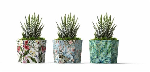 LiveTrends Succulents - Assorted Perspective: front
