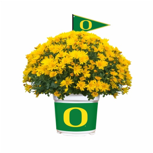 Sporticulture Oregon Ducks Team Color Potted Mum Perspective: front