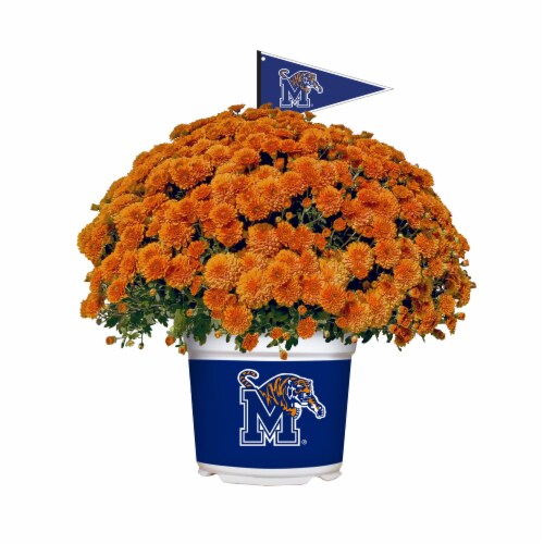 Sporticulture Memphis Tigers Team Color Potted Mum Perspective: front