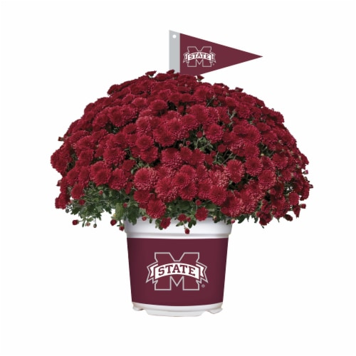 Sporticulture Mississippi State Bulldogs Team Color Potted Mum Perspective: front