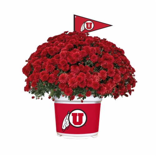 Sporticulture Utah Utes Team Color Potted Mum Perspective: front