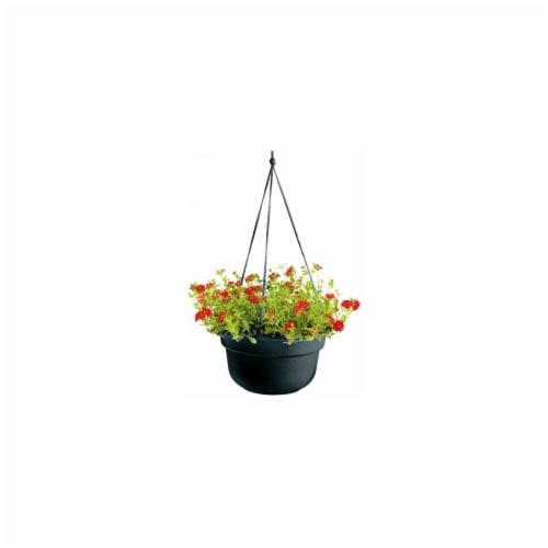 Bloem LLC Hanging Basket Perspective: front