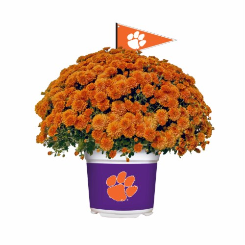 Sporticulture Clemson Tigers Team Color Potted Mum Perspective: front