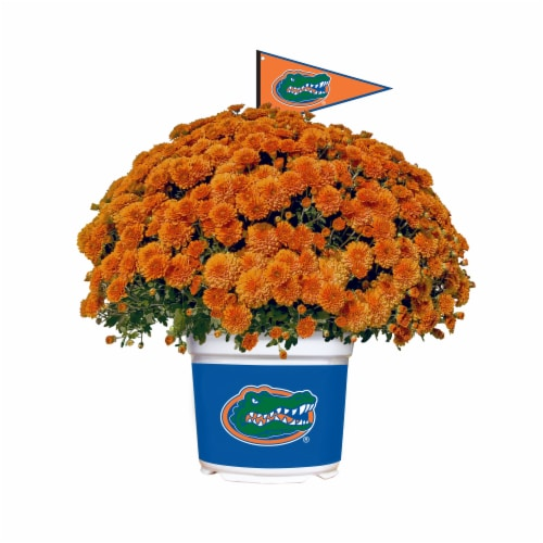 Sporticulture Florida Gators Team Color Potted Mum Perspective: front