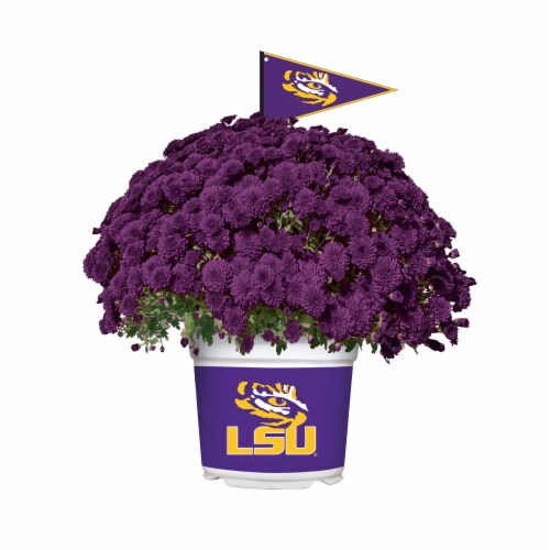 Sporticulture LSU Tigers Team Color Potted Mum Perspective: front