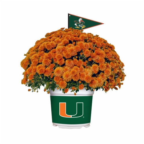 Sporticulture Miami Hurricanes Team Color Potted Mum Perspective: front