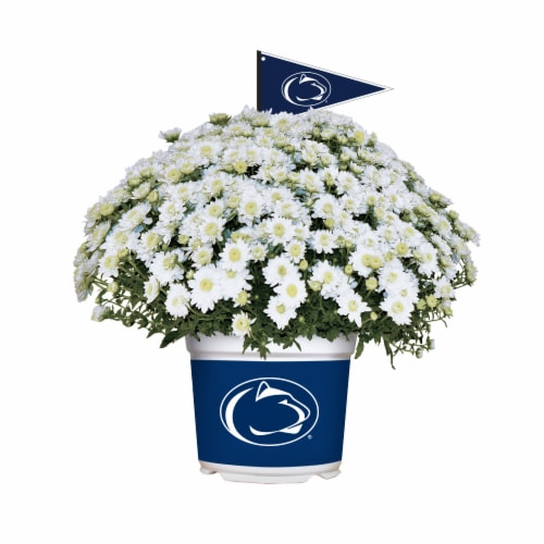 Sporticulture Penn State Nittany Lions Team Color Potted Mum Perspective: front