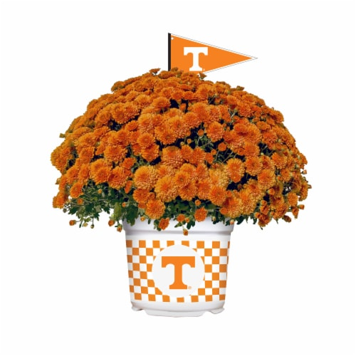 Sporticulture Tennessee Volunteers Team Color Potted Mum Perspective: front