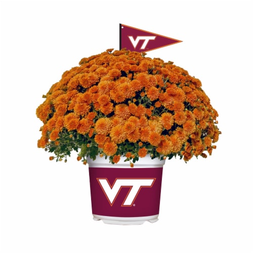 Sporticulture Virginia Tech Hokies Team Color Potted Mum Perspective: front