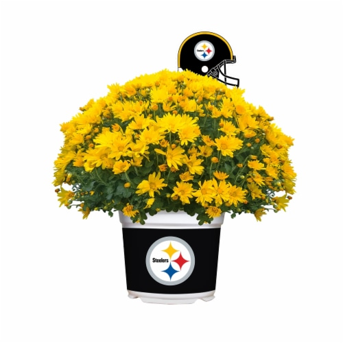 Sporticulture Pittsburgh Steelers Team Color Potted Mum Perspective: front