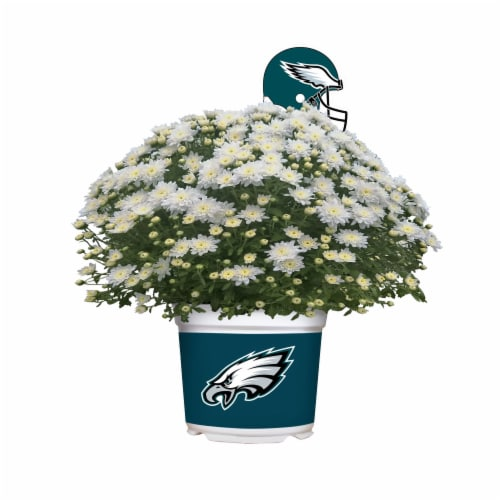 Sporticulture Philadelphia Eagles Team Color Potted Mum Perspective: front