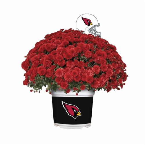 Sporticulture Arizona Cardinals Team Color Potted Mum Perspective: front