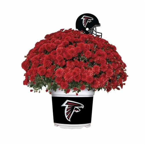 Sporticulture Atlanta Falcons Team Color Potted Mum Perspective: front