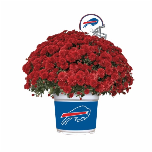 Sporticulture Buffalo Bills Team Color Potted Mum Perspective: front