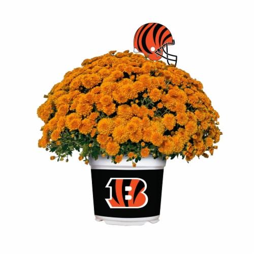 Sporticulture Cincinnati Bengals Team Color Potted Mum Perspective: front