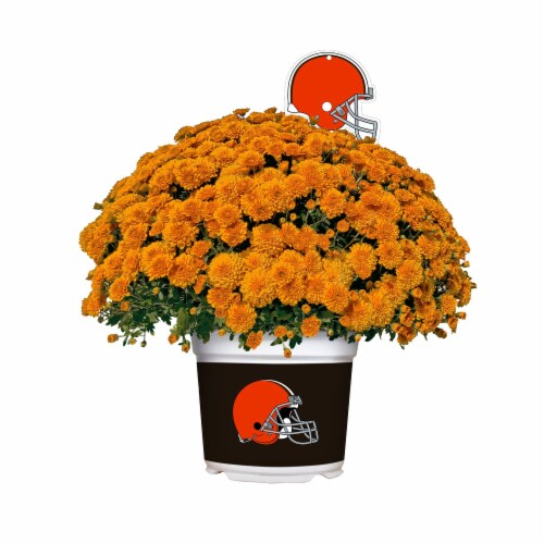 Sporticulture Cleveland Browns Team Color Potted Mum Perspective: front