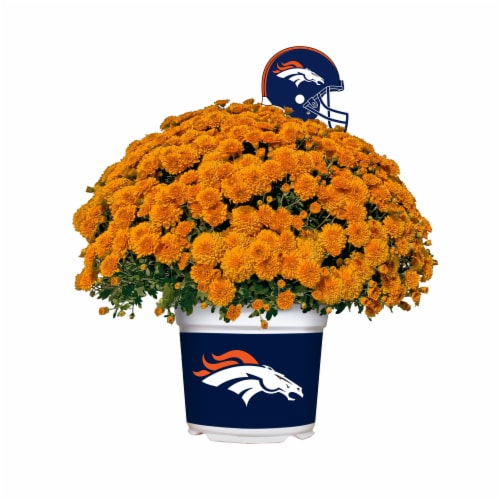 Sporticulture Denver Broncos Team Color Potted Mum Perspective: front