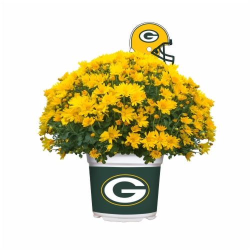 Sporticulture Green Bay Packers Team Color Potted Mum Perspective: front