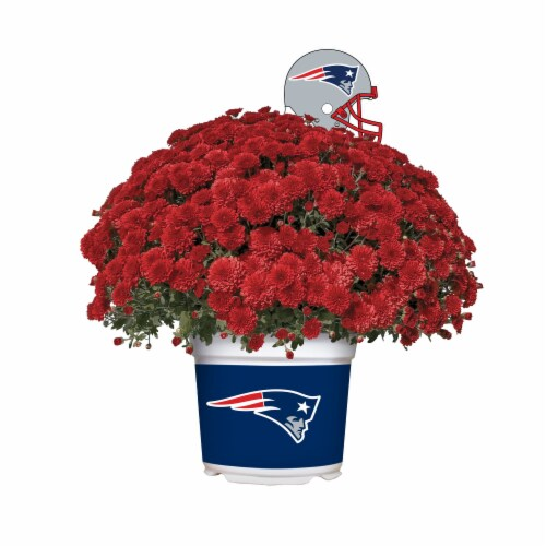 Sporticulture New England Patriots Team Color Potted Mum Perspective: front