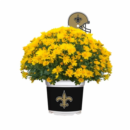 Sporticulture New Orleans Saints Team Color Potted Mum Perspective: front