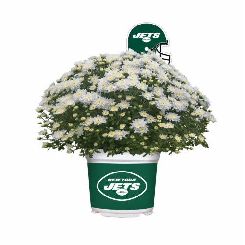 Sporticulture New York Jets Team Color Potted Mum Perspective: front