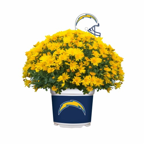Sporticulture Los Angeles Chargers Team Color Potted Mum Perspective: front