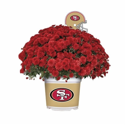 Sporticulture San Francisco 49ers Team Color Potted Mum Perspective: front