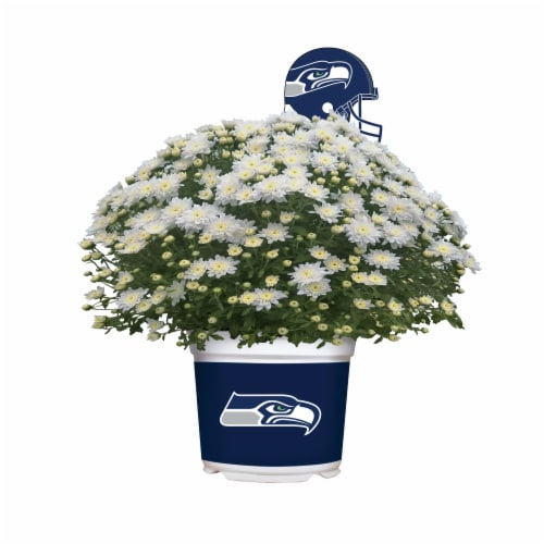Sporticulture Seattle Seahawks Team Color Potted Mum Perspective: front