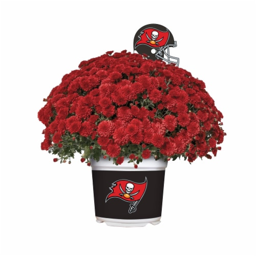 Sporticulture Tampa Bay Buccaneers Team Color Potted Mum Perspective: front