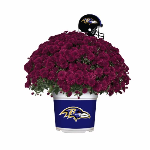 Sporticulture Baltimore Ravens Team Color Potted Mum Perspective: front